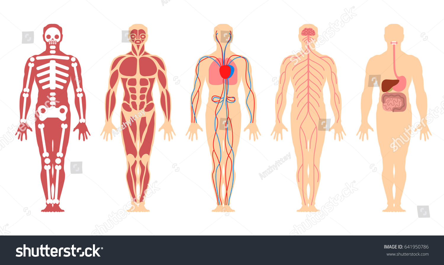Different systems human body diagram illustration stock vector different systems of human body diagram illustration ccuart Images