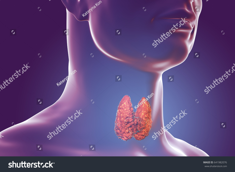 Thyroid Gland Inside Human Body 3 D Stock Illustration 641982076