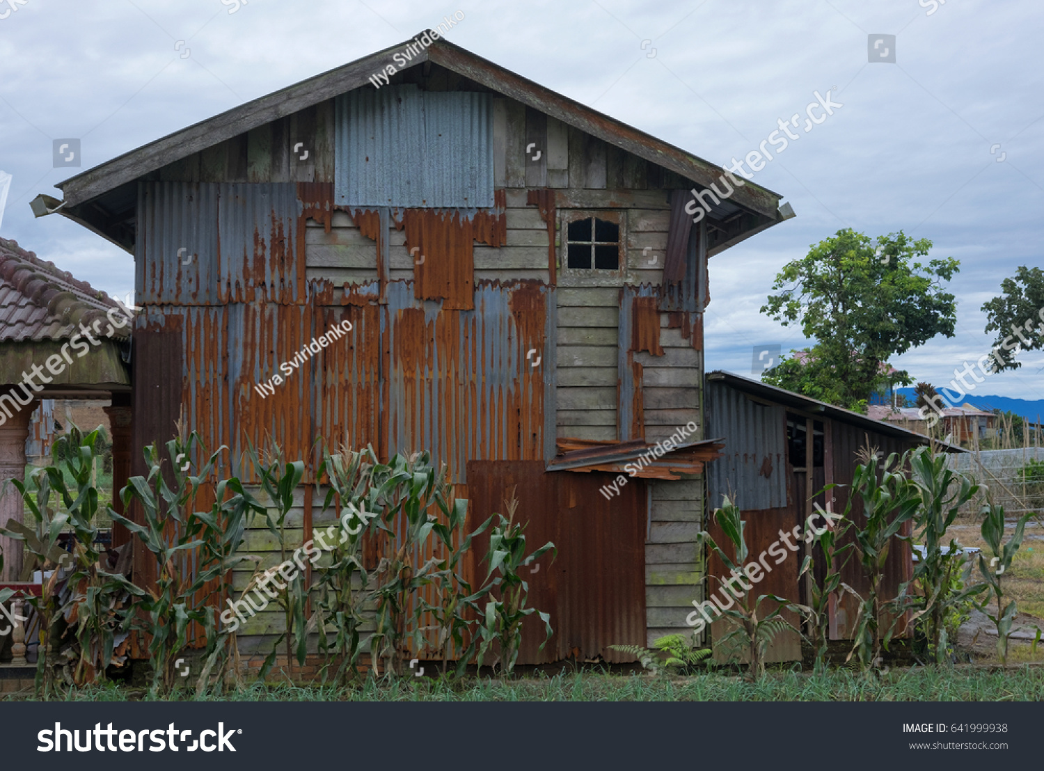 Old rusty abandoned rural house in countryside area. Grass and green corn in front. #641999938