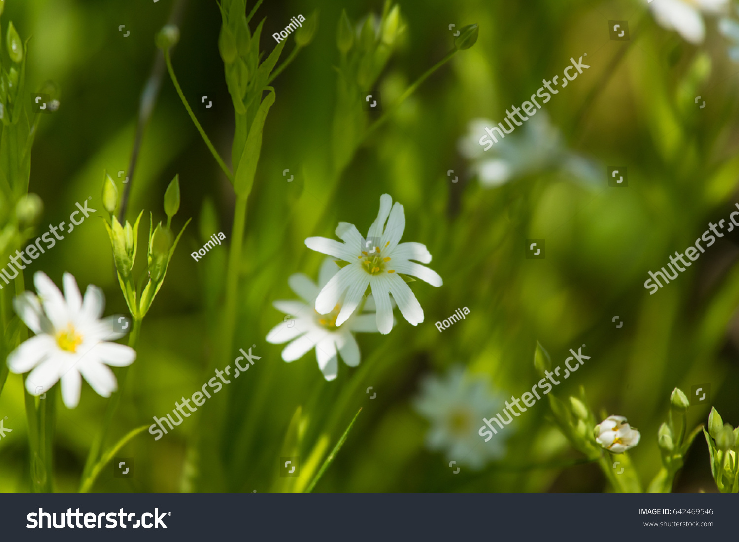 Beautiful White Flowers Ez Canvas