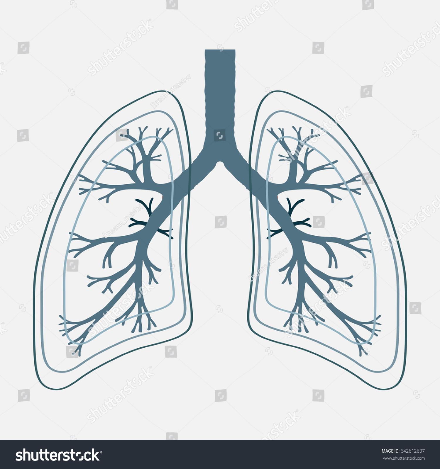 Human Lung Anatomy Illustration Illness Respiratory Stock ...