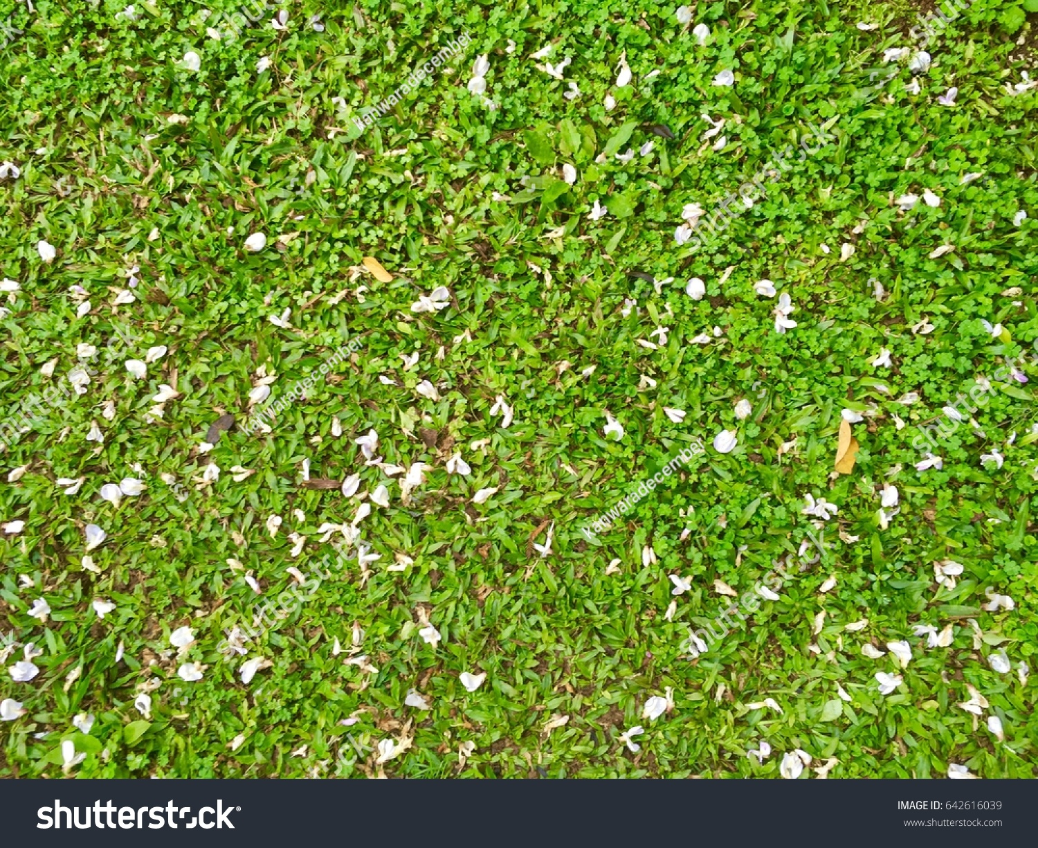 Beautiful fall flowers green grass background stock photo 642616039 beautiful fall flowers and green grass background izmirmasajfo