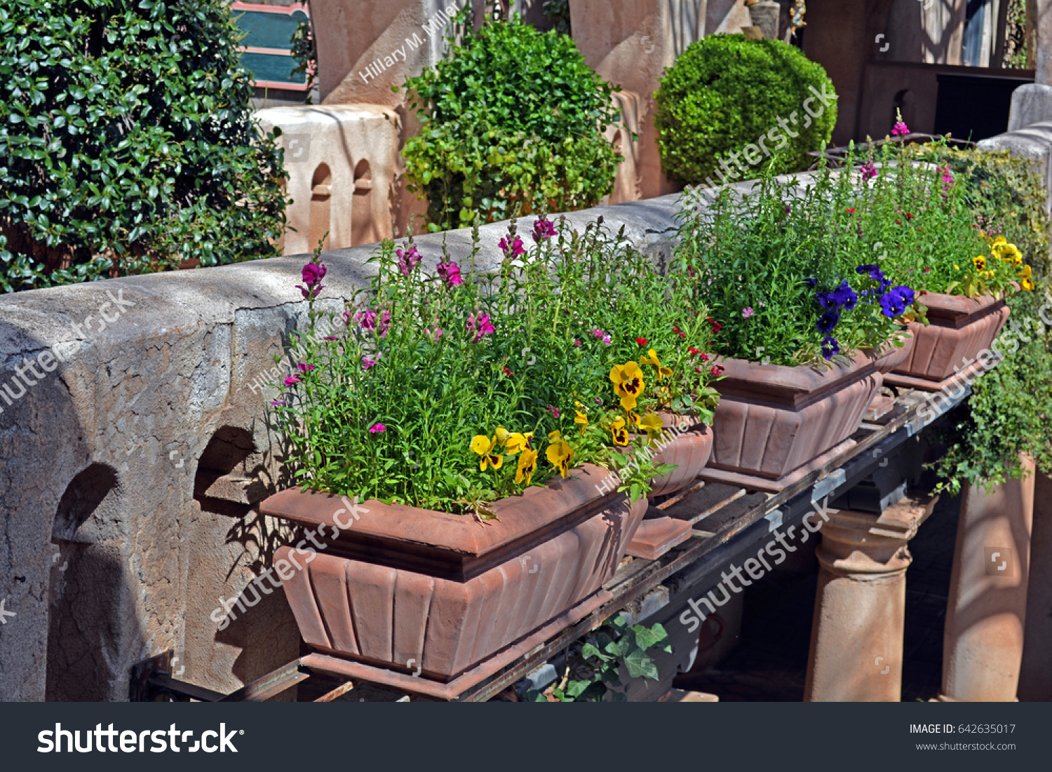 A Hanging Shelf Of Planter Boxes Containing Yellow And Purple Geraniums And  Other Flowers Next To