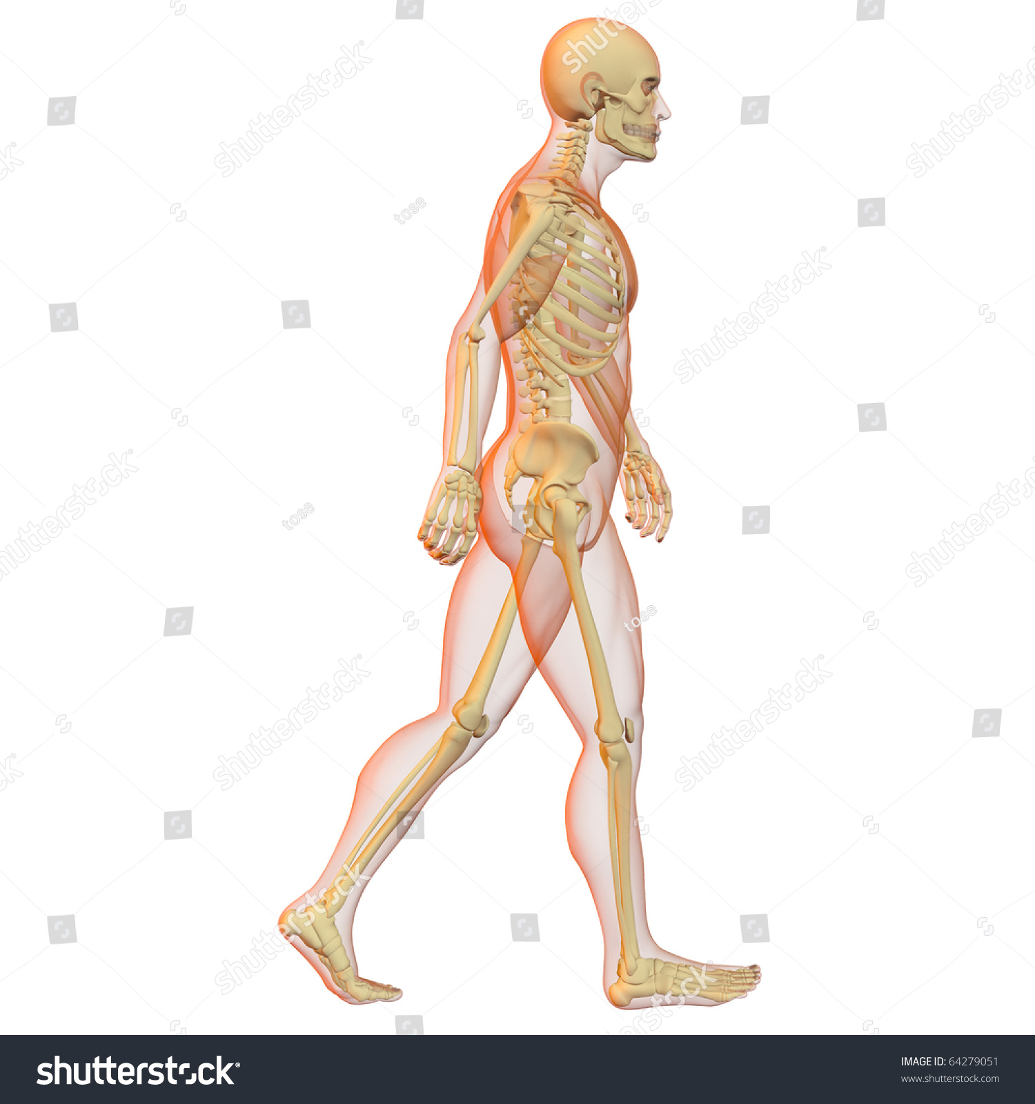 X-Ray Illustration Of Male Human Body And Skeleton. 3d ...