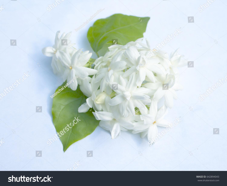 Arabian jasmine jasminum sambac flower leaves stock photo royalty arabian jasmine jasminum sambac flower and leaves jasmine tea flower isolated on white izmirmasajfo