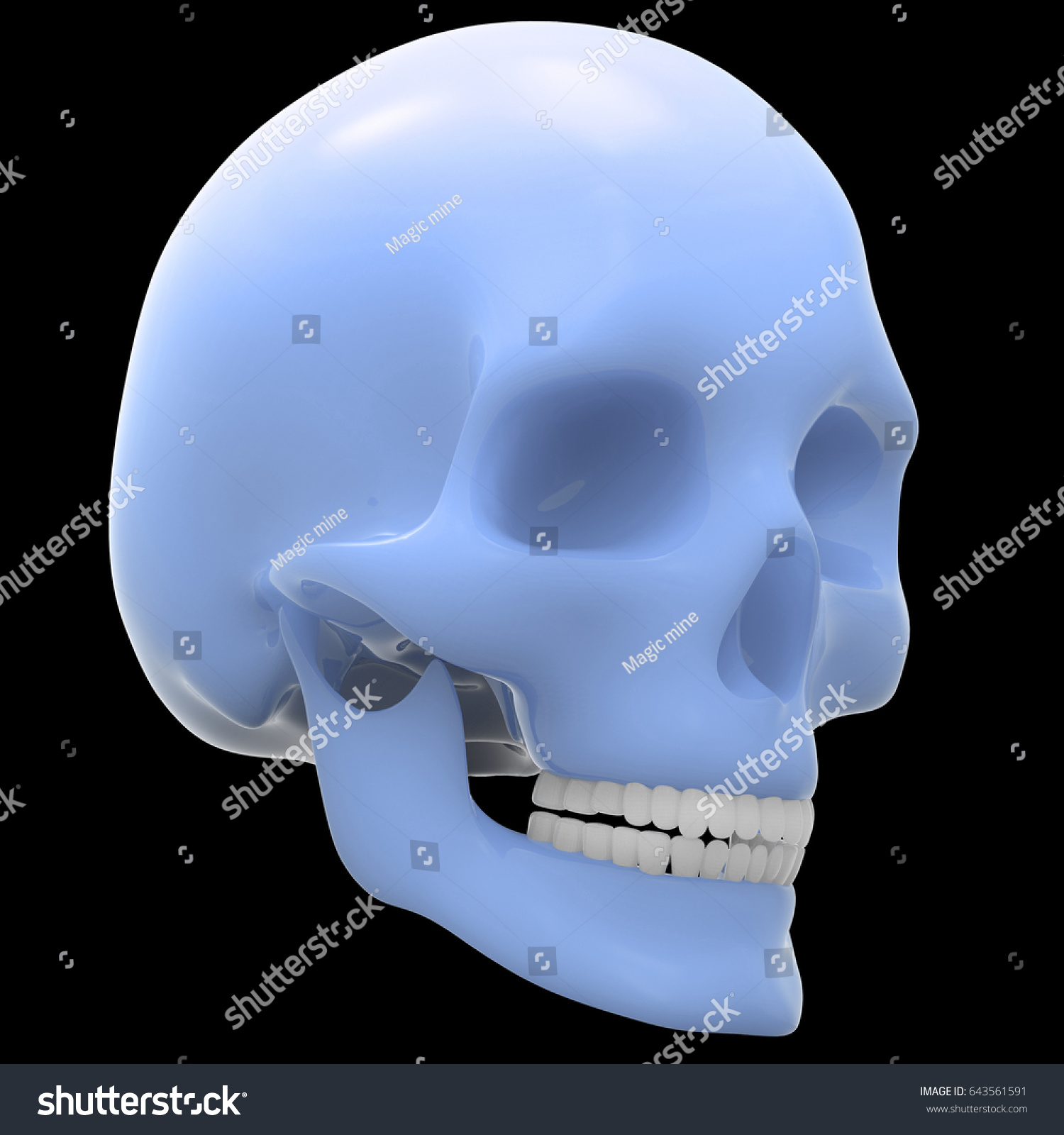 Human Skeleton Skull Anatomy 3 D Stock Illustration 643561591 ...