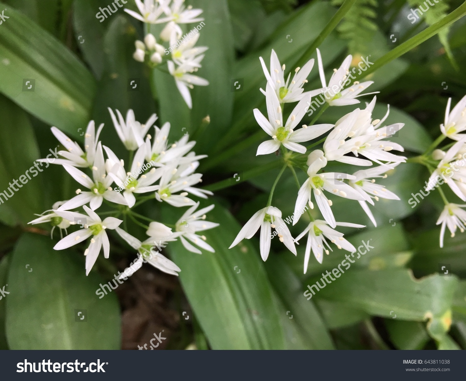 White Flowers Grass Rydal Water Lake Stock Photo Royalty Free