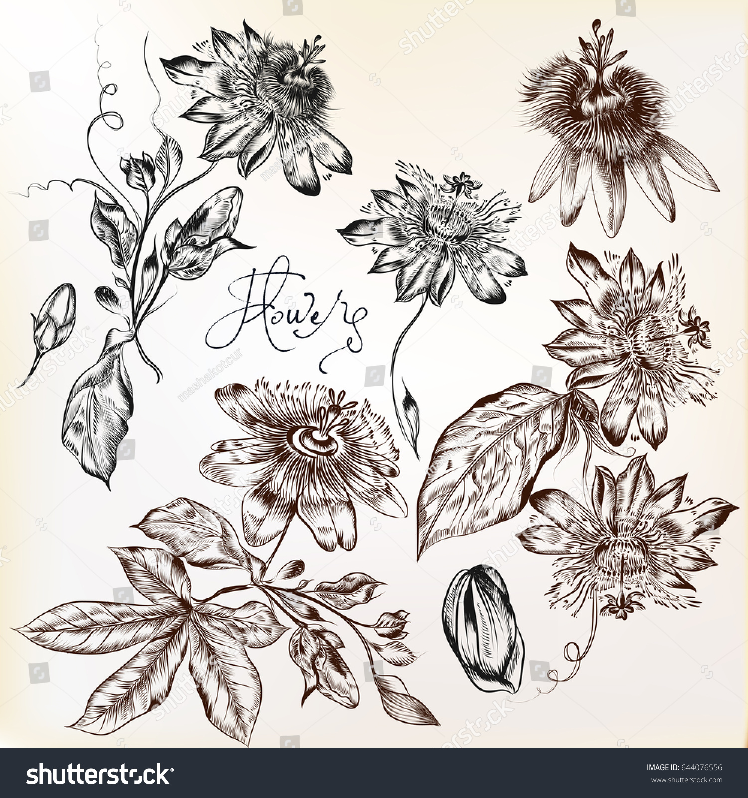 collection hand drawn vector realistic flowers stock vector