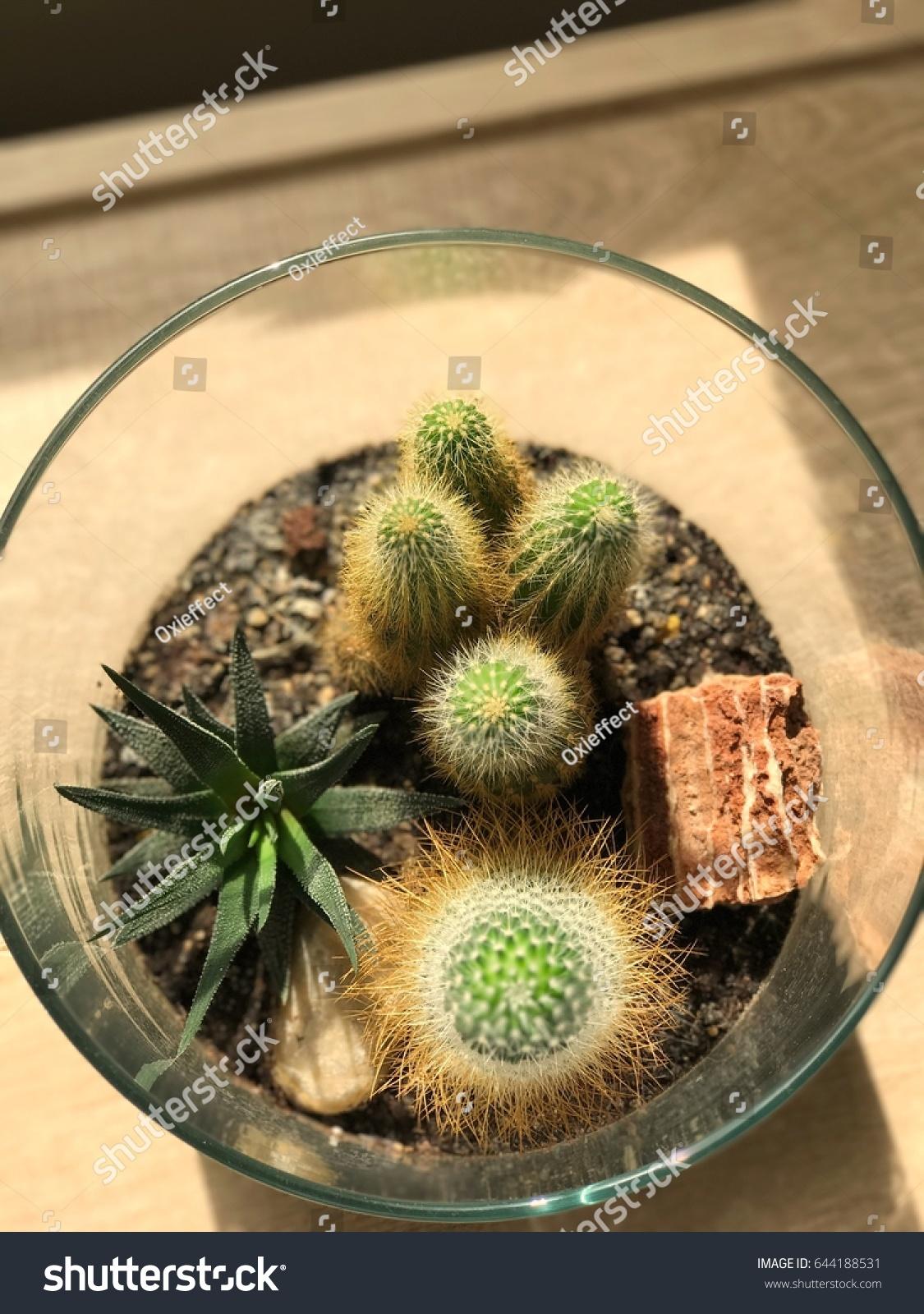 Desert Terrarium Stock Photo Edit Now 644188531
