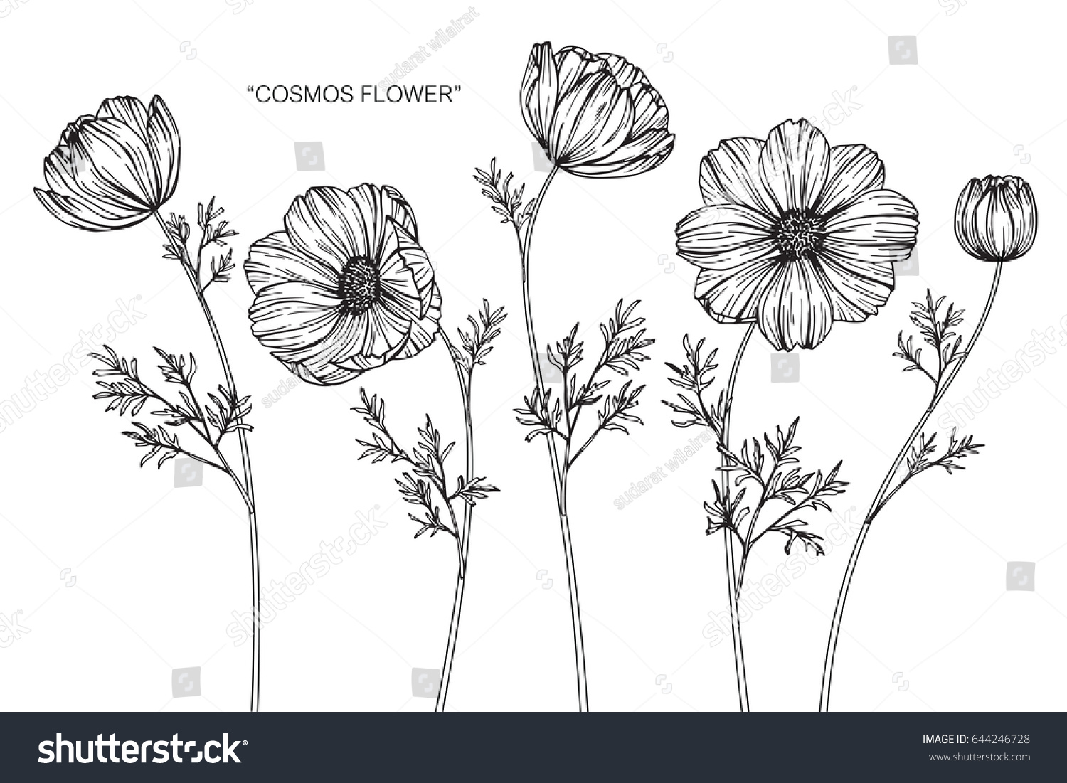 Cosmos Flowers Drawing Sketch Lineart On Stock Vector