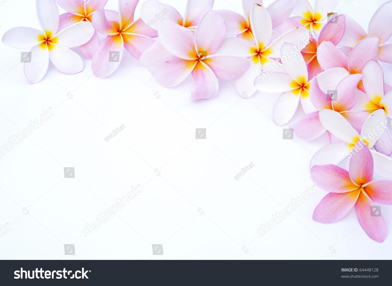 Plumeria Clip Art - Royalty Free - GoGraph