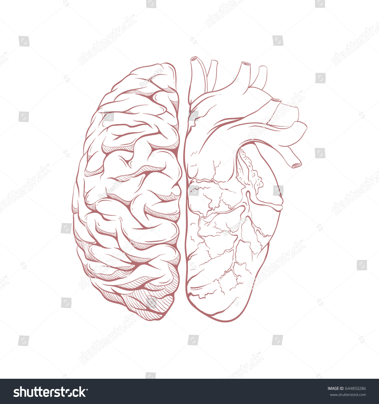 Versus human brain right and left hemisphere and heart illustration ...