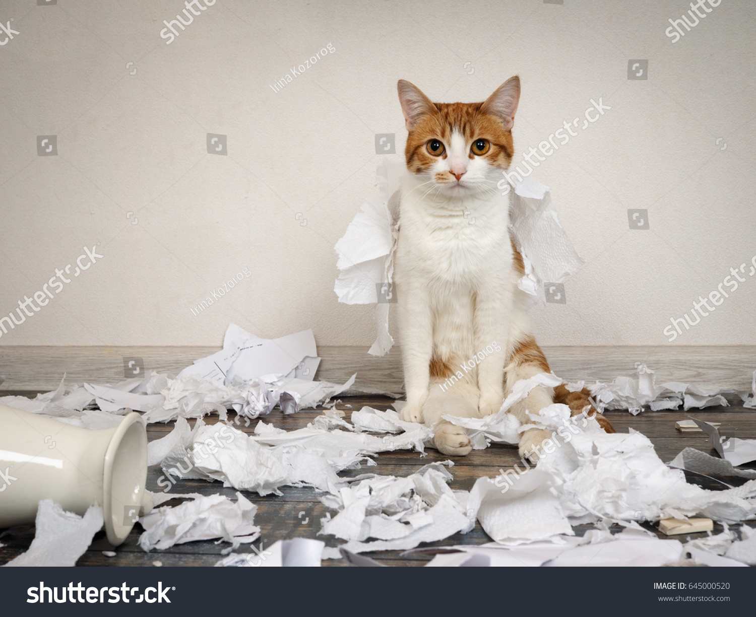 Funny cat made mess tore paper funny cat made a mess tore up paper voltagebd Gallery