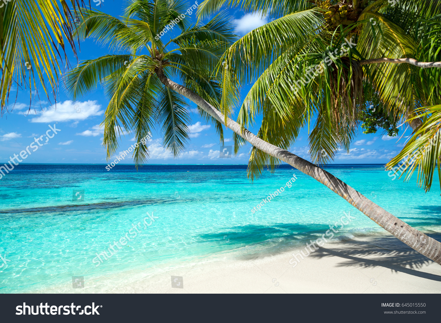 tropical paradise beach white sand coco stock photo (royalty free