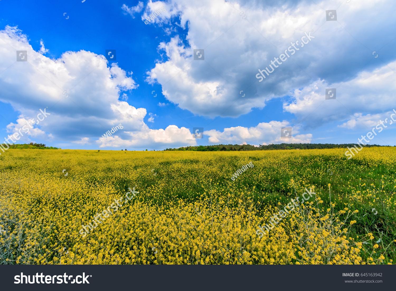 Beautiful scenic summer landscape of wild meadow with yellow id 645163942 izmirmasajfo