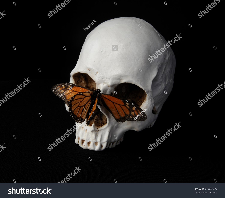 Still life portrait skull monarch butterfly stock photo 645757972 still life portrait of a skull with a monarch butterfly against a black background biocorpaavc Gallery
