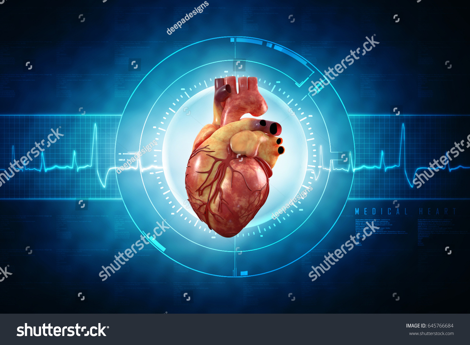 3 D Anatomy Human Heart Stock Illustration 645766684 - Shutterstock