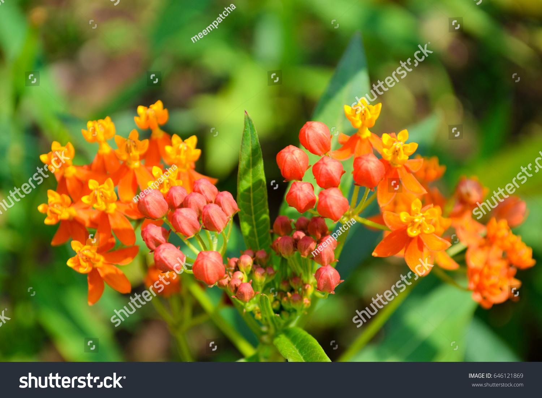Red Bud Flower Orange Bloom Flowers Stock Photo Edit Now 646121869