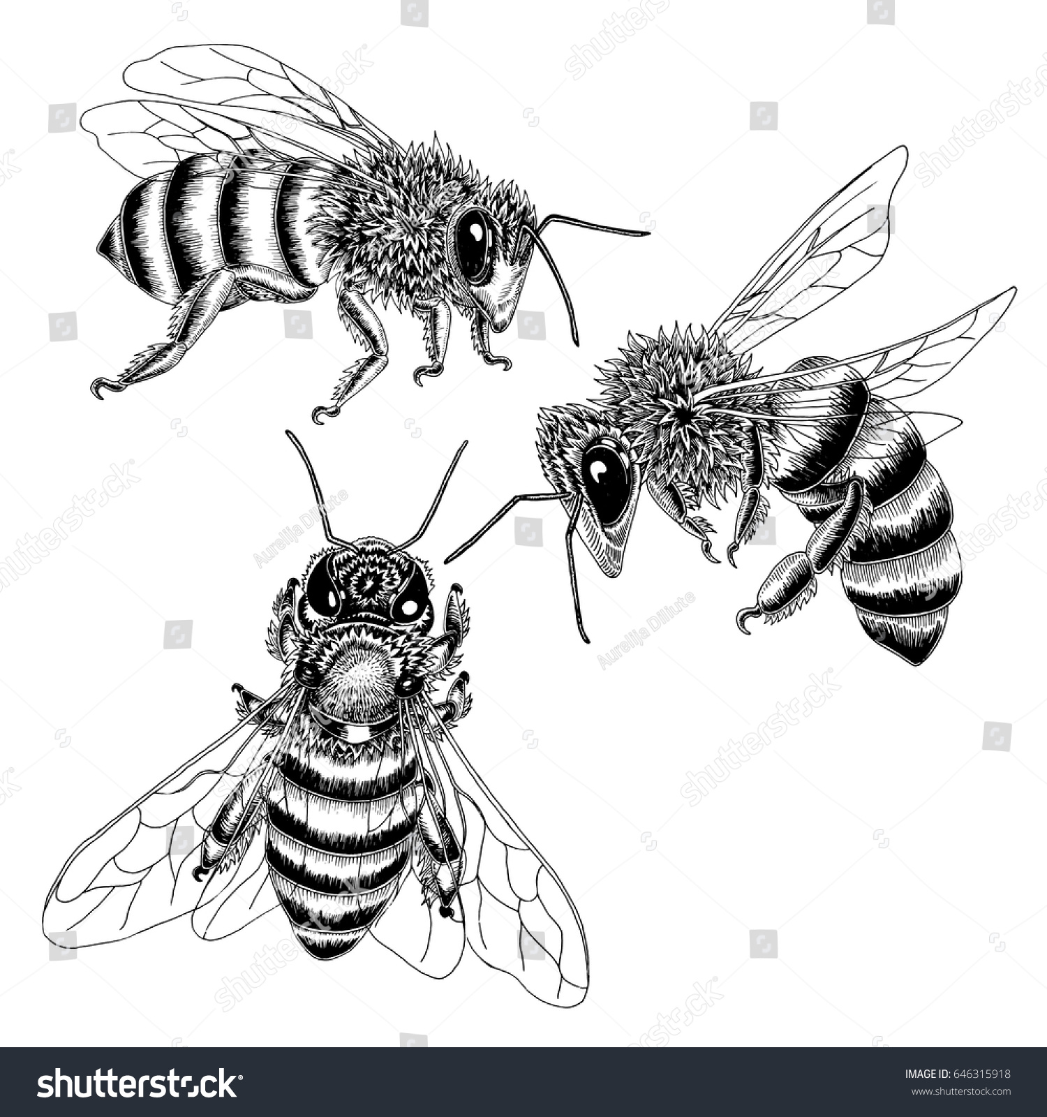 Hand Drawn Bees Sketch Set In Black And White Vector Illustration Of Three From