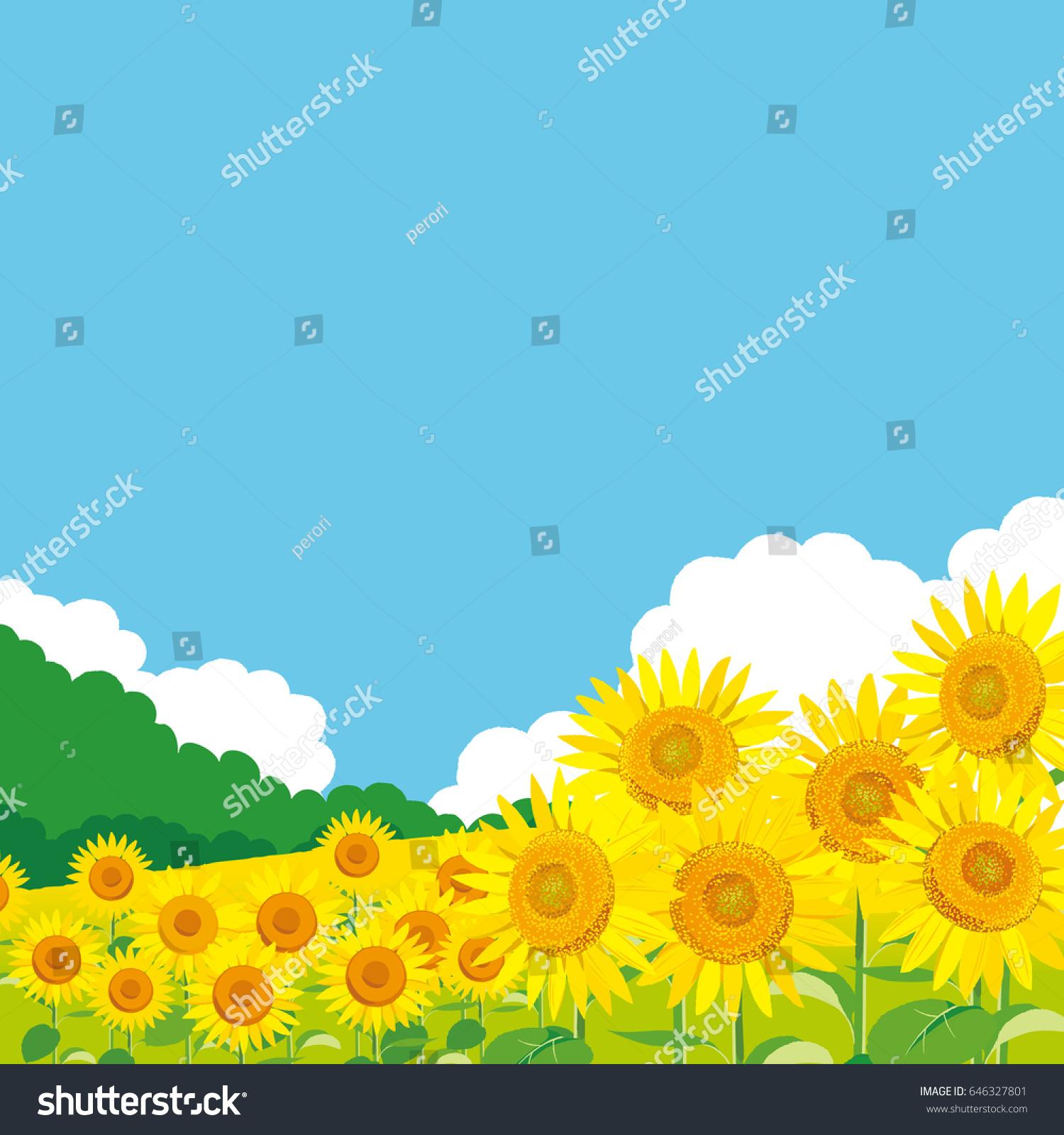vector illustration wallpaper background landscape sunflowers stock
