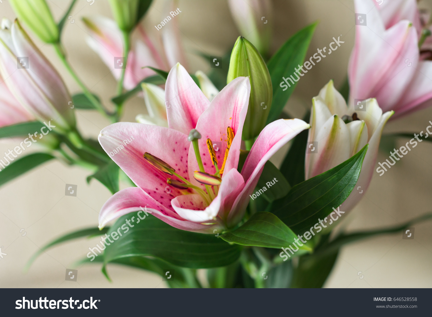Beautiful lily flower on green background stock photo safe to use beautiful lily flower on green background with space for text perfect image for izmirmasajfo