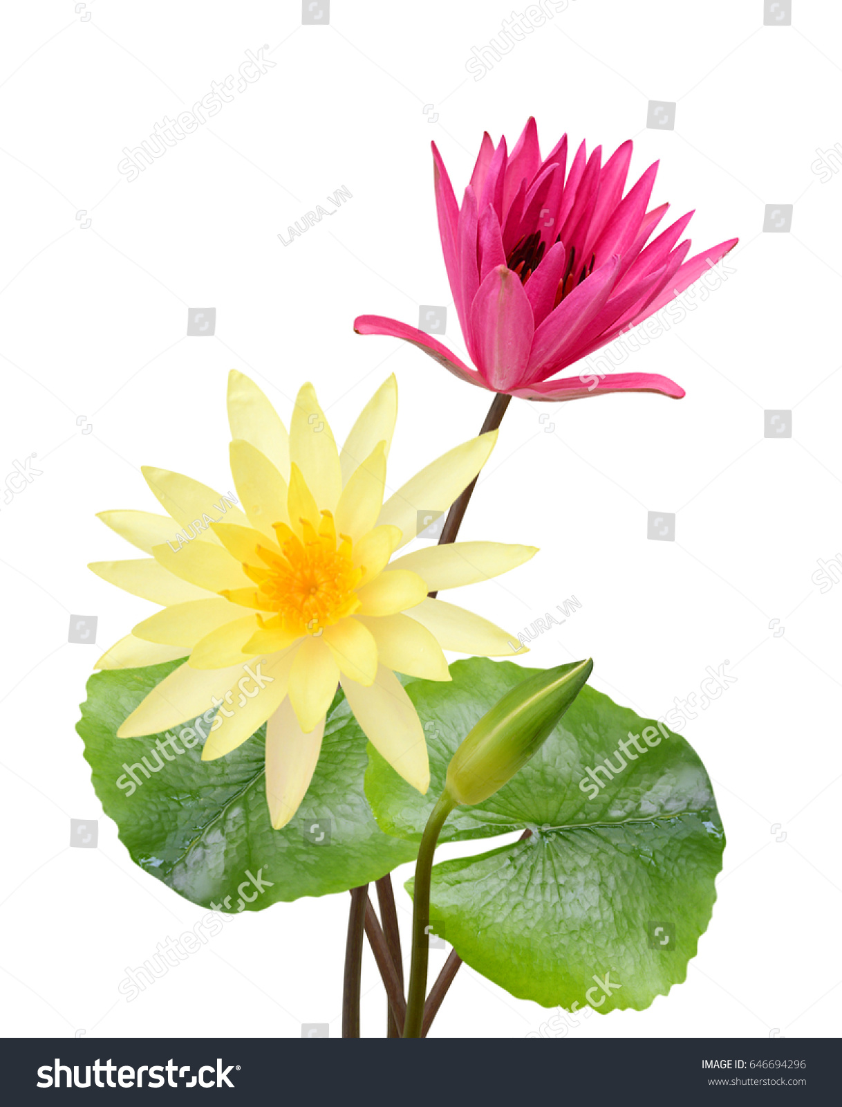 Beautiful Water Lily Flower Bouquet Isolated Stock Photo Royalty