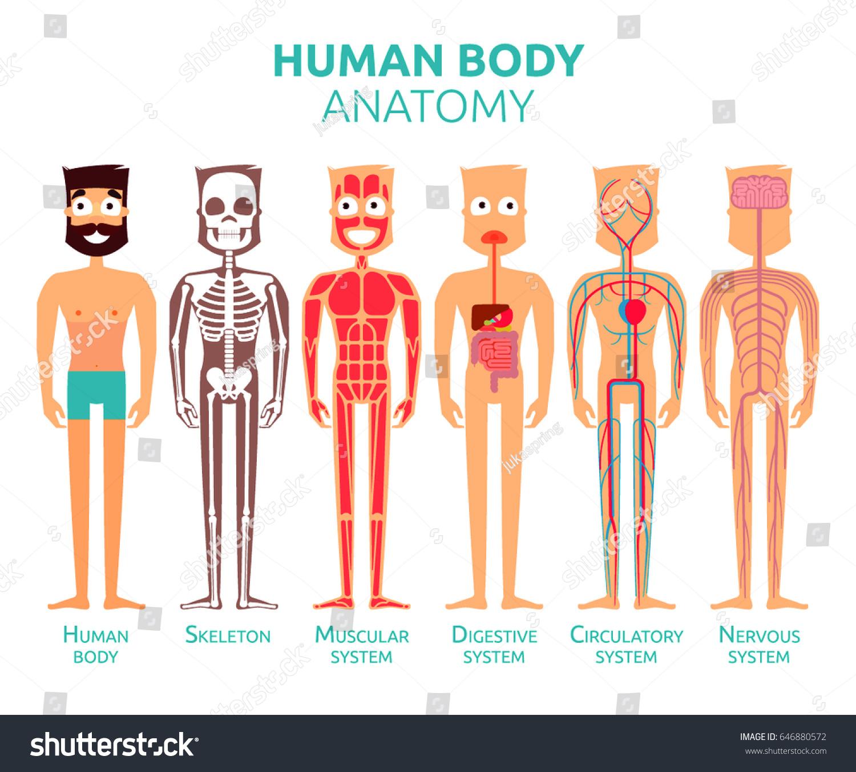 Human Body Cartoon Stylized Anatomy Vector Stock-Vektorgrafik ...