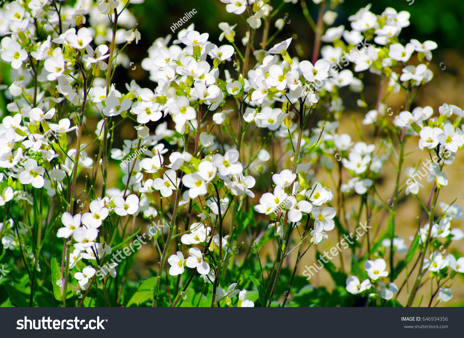 White meadow flowers green mood stock photo royalty free 646934356 white meadow flowers with green mood mightylinksfo