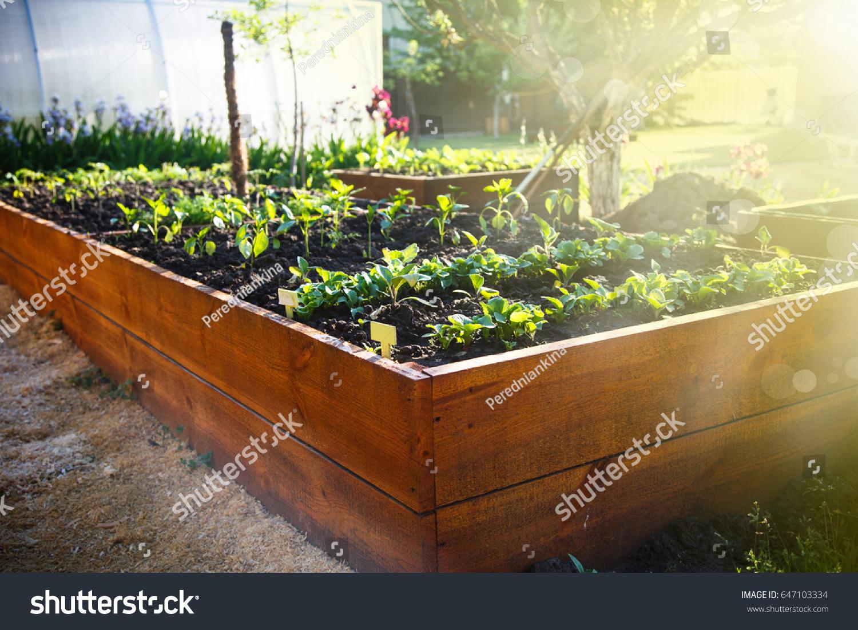 Spring Green Garden Wooden Box Under Stock Photo (Edit Now ...