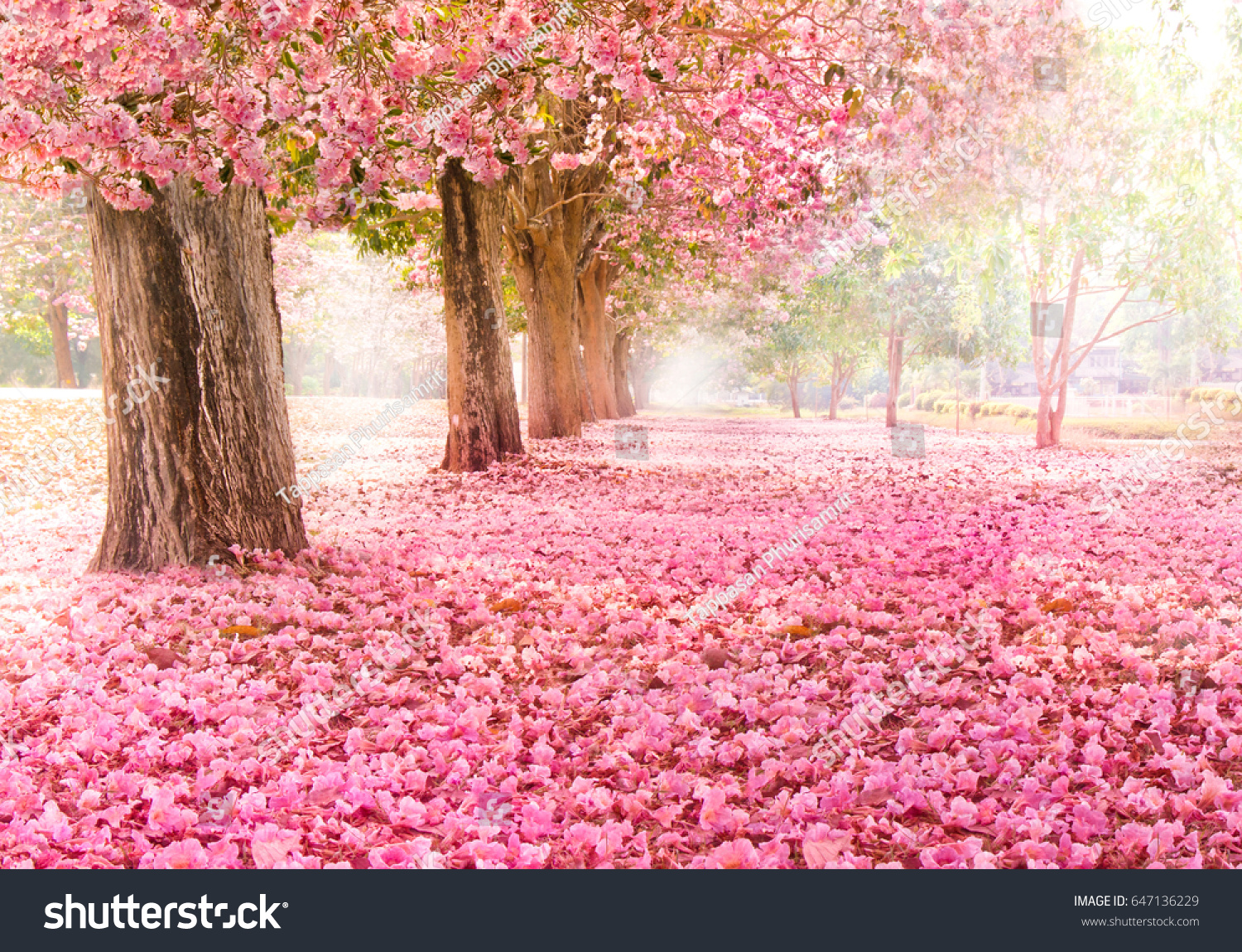 Romantic Tunnel Pink Flower Trees Stock Photo Edit Now 647136229