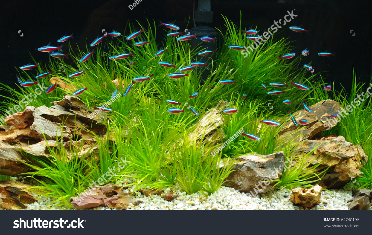 Aquarium neon stock photo 64740196 shutterstock for Neon fish tank