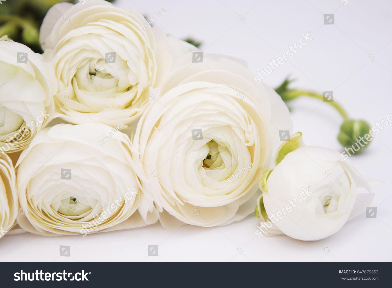 Ranunculus white flower bouquet isolated ez canvas id 647679853 mightylinksfo