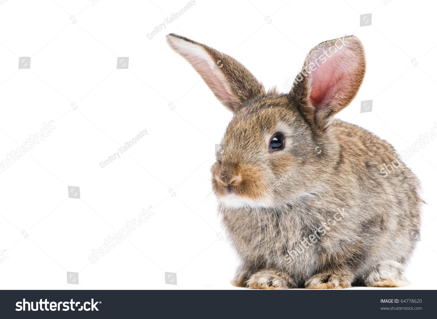 One Young Light Brown Rabbits With Long Ears Standing ...