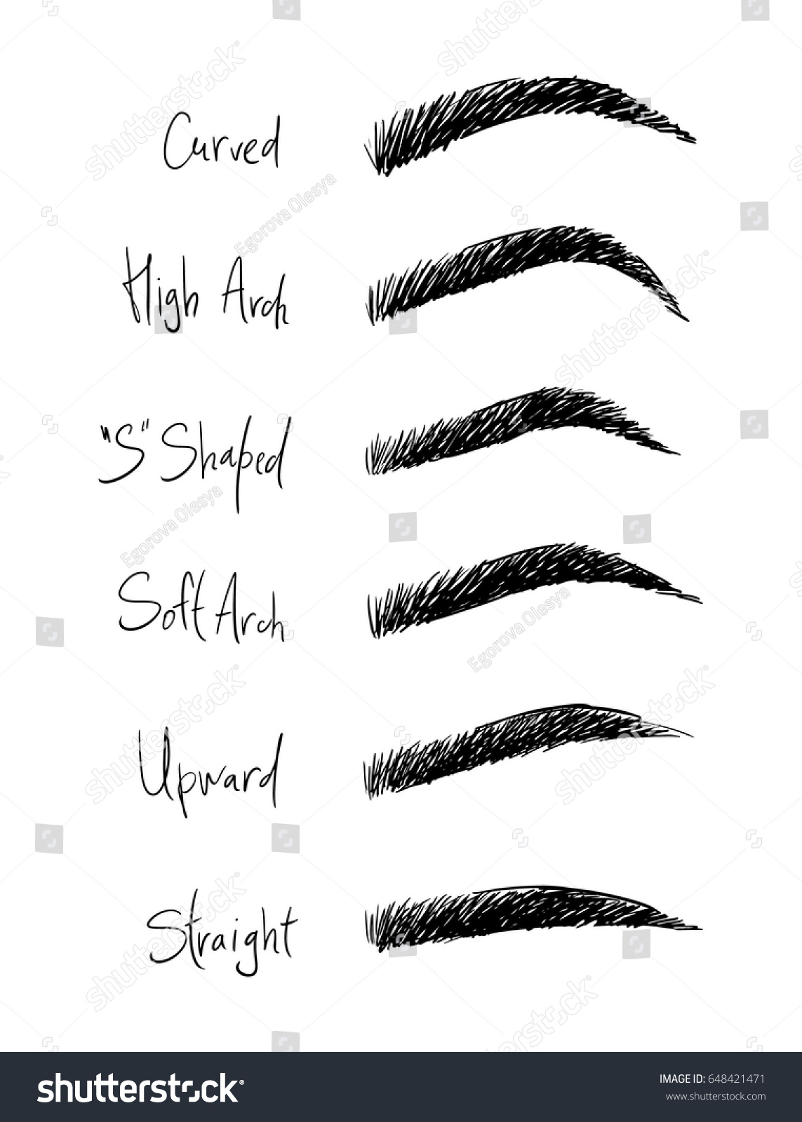 Types Eyebrows Names Illustrations Beauty Salons Stock Vector