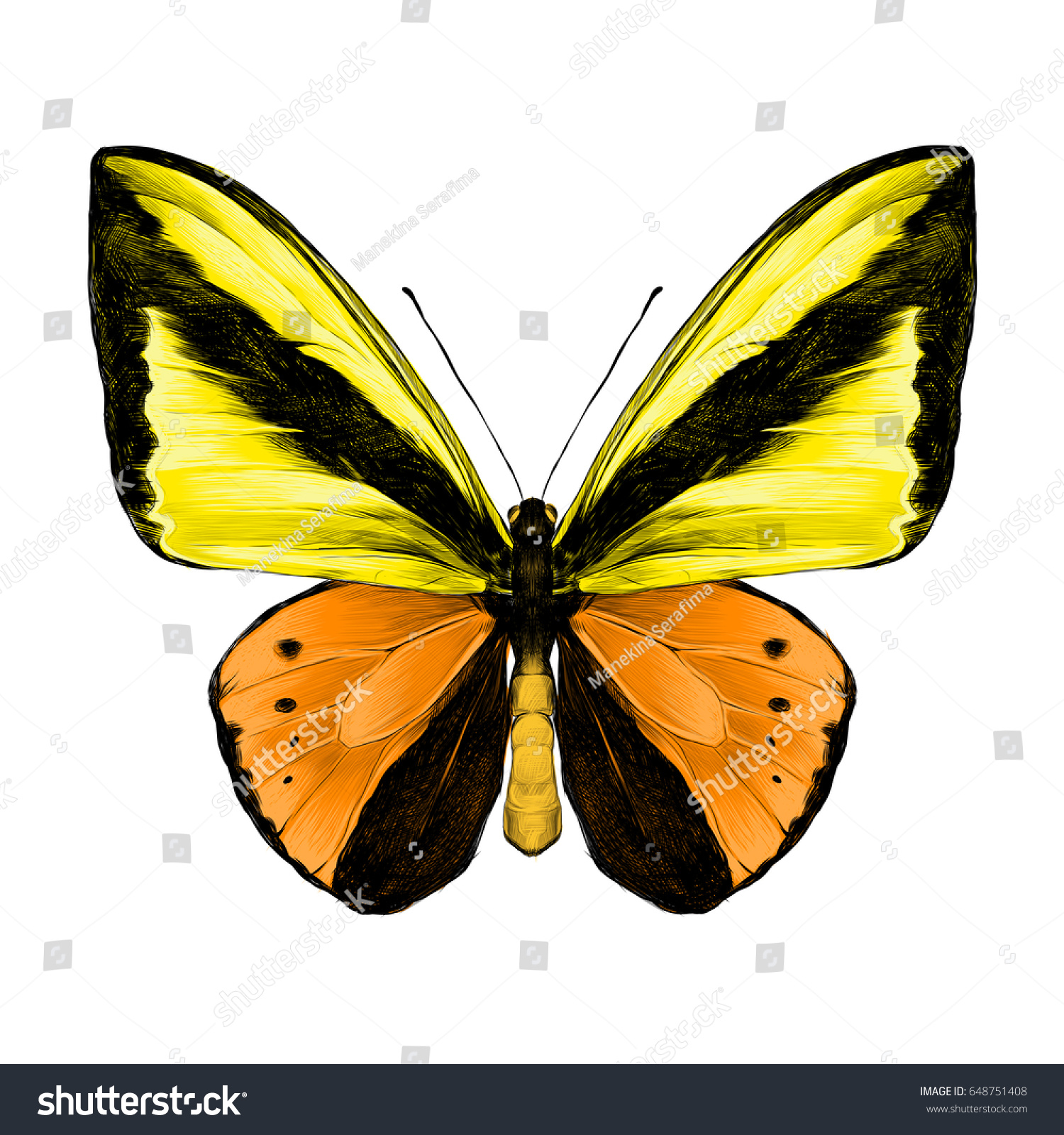 Butterfly Symmetric Top View Orange Yellow Stock Vector Royalty