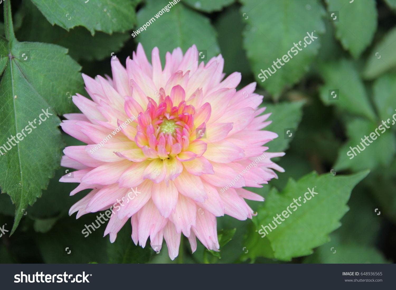 Beautiful flowers pretty flowers flowers flowers stock photo image beautiful flowers pretty flowers flowers flowers in bloom izmirmasajfo