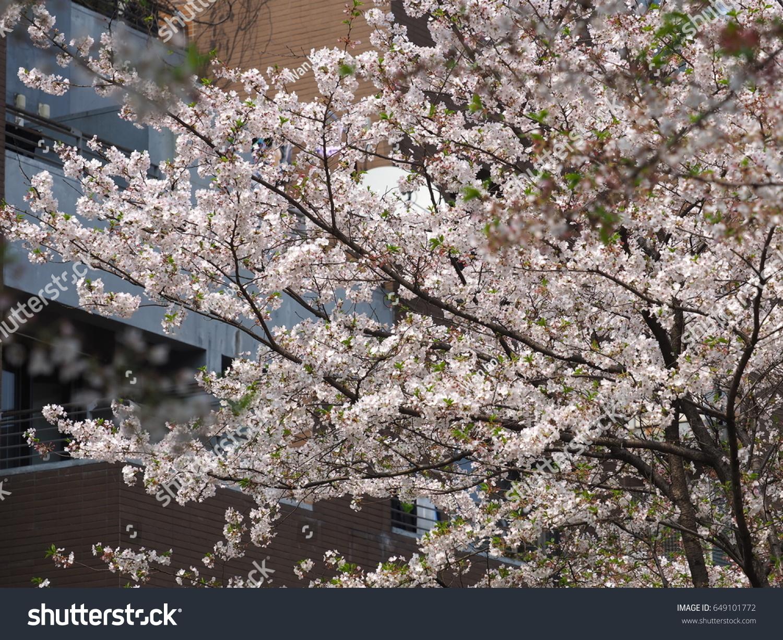 Beautiful Spring View Garden Blooming White Stock Photo 649101772