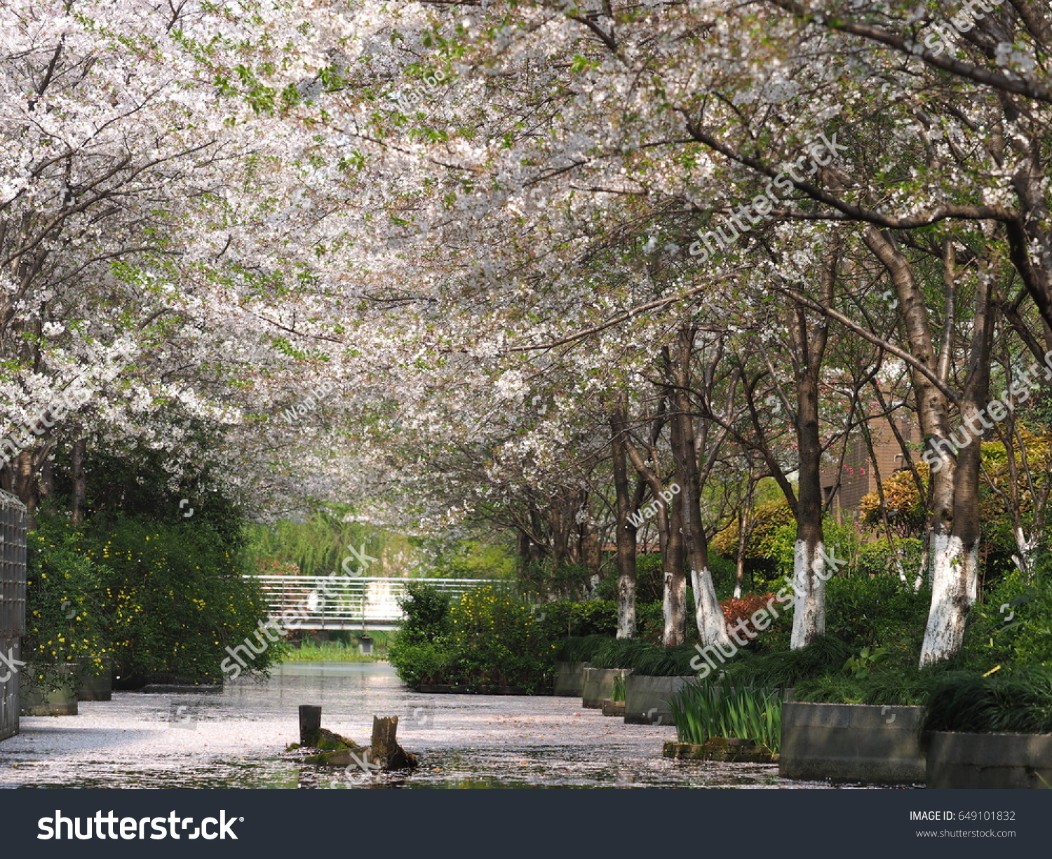Beautiful Spring View Garden Blooming White Stock Photo Download