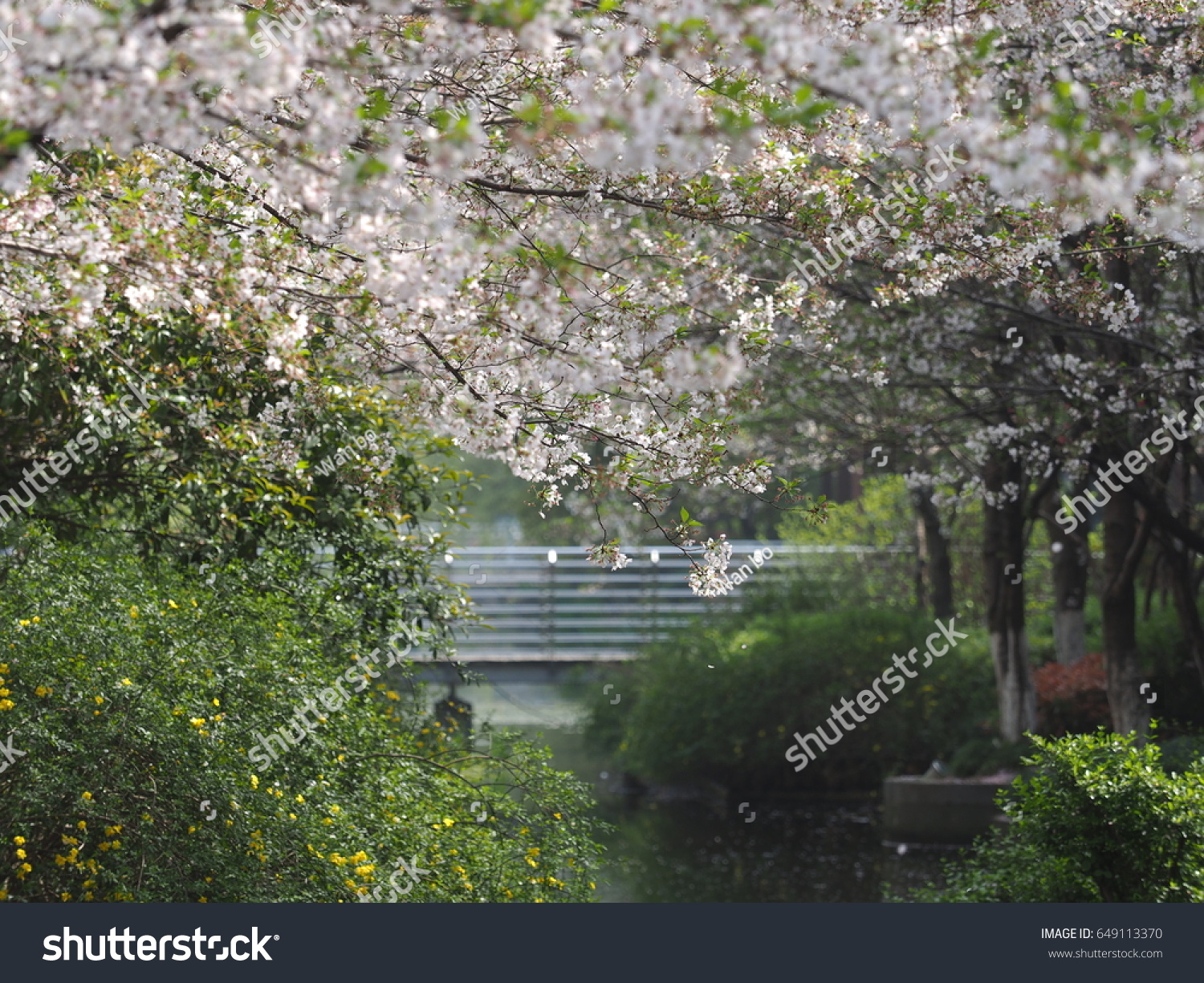 The Beautiful Spring View In The Garden With The Blooming White