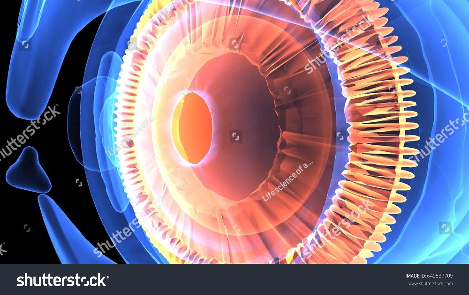 3 D Illustration Human Eye Anatomy Stock Illustration 649587709