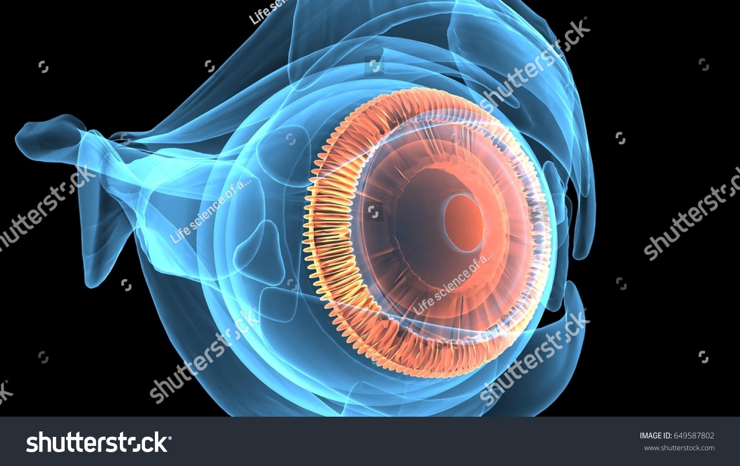 3 D Illustration Human Eye Anatomy Stock Illustration 649587802