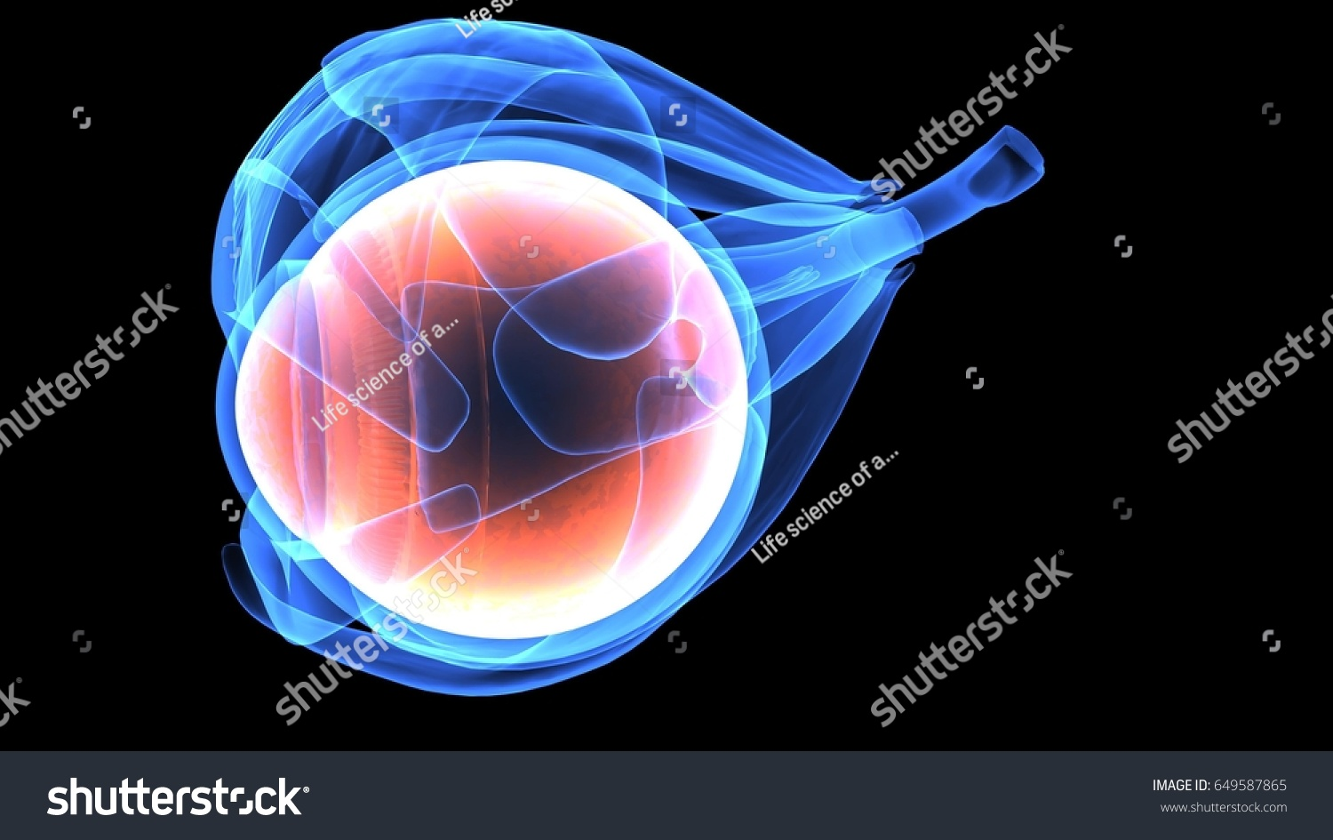 3 D Illustration Human Eye Anatomy Stock Illustration 649587865