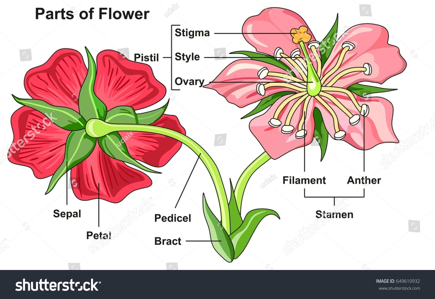 Flower Parts Diagram Front Back View Stock Vector Shutterstock