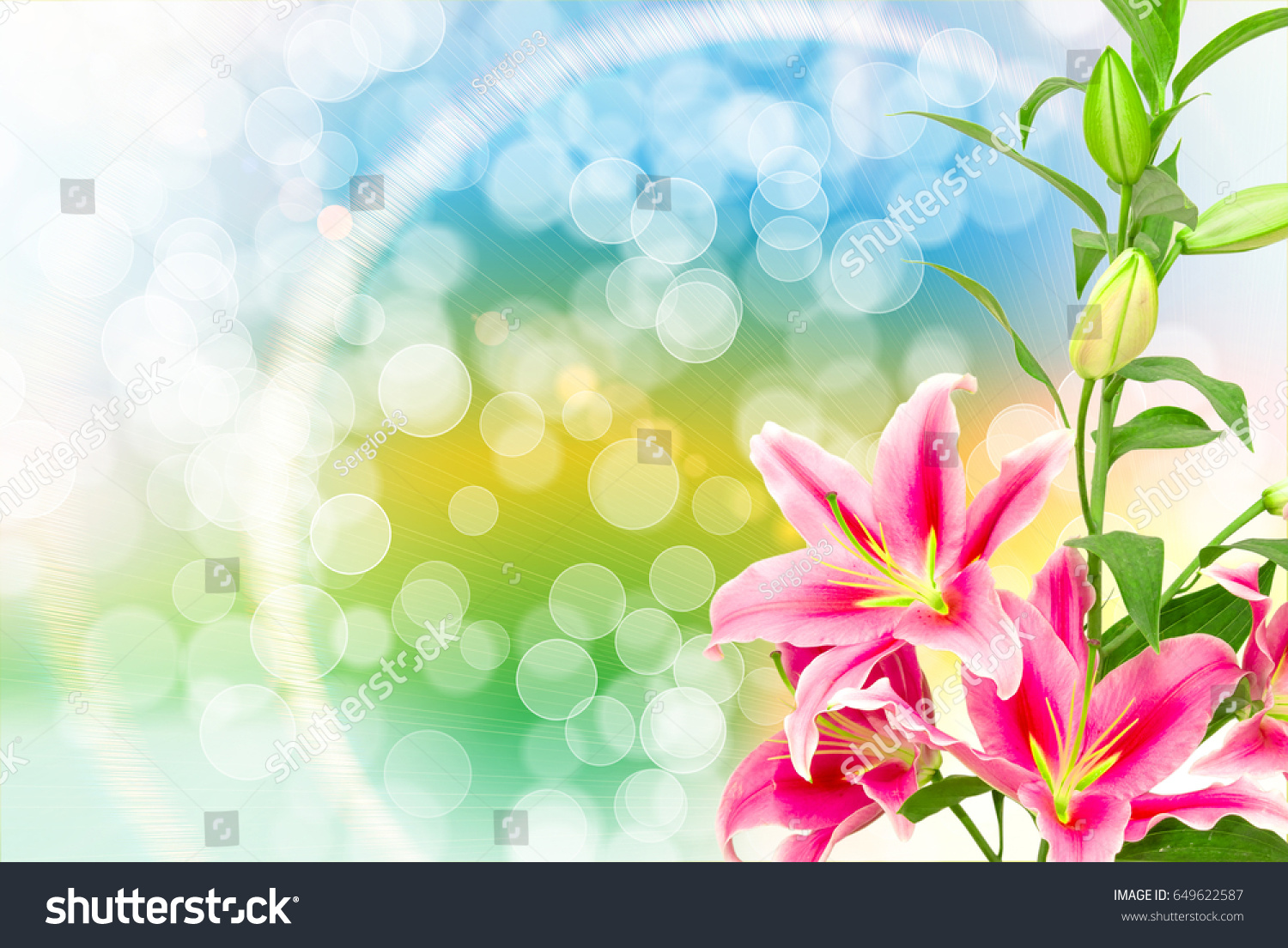 Close up of beautiful pink lilies flowers ez canvas id 649622587 izmirmasajfo