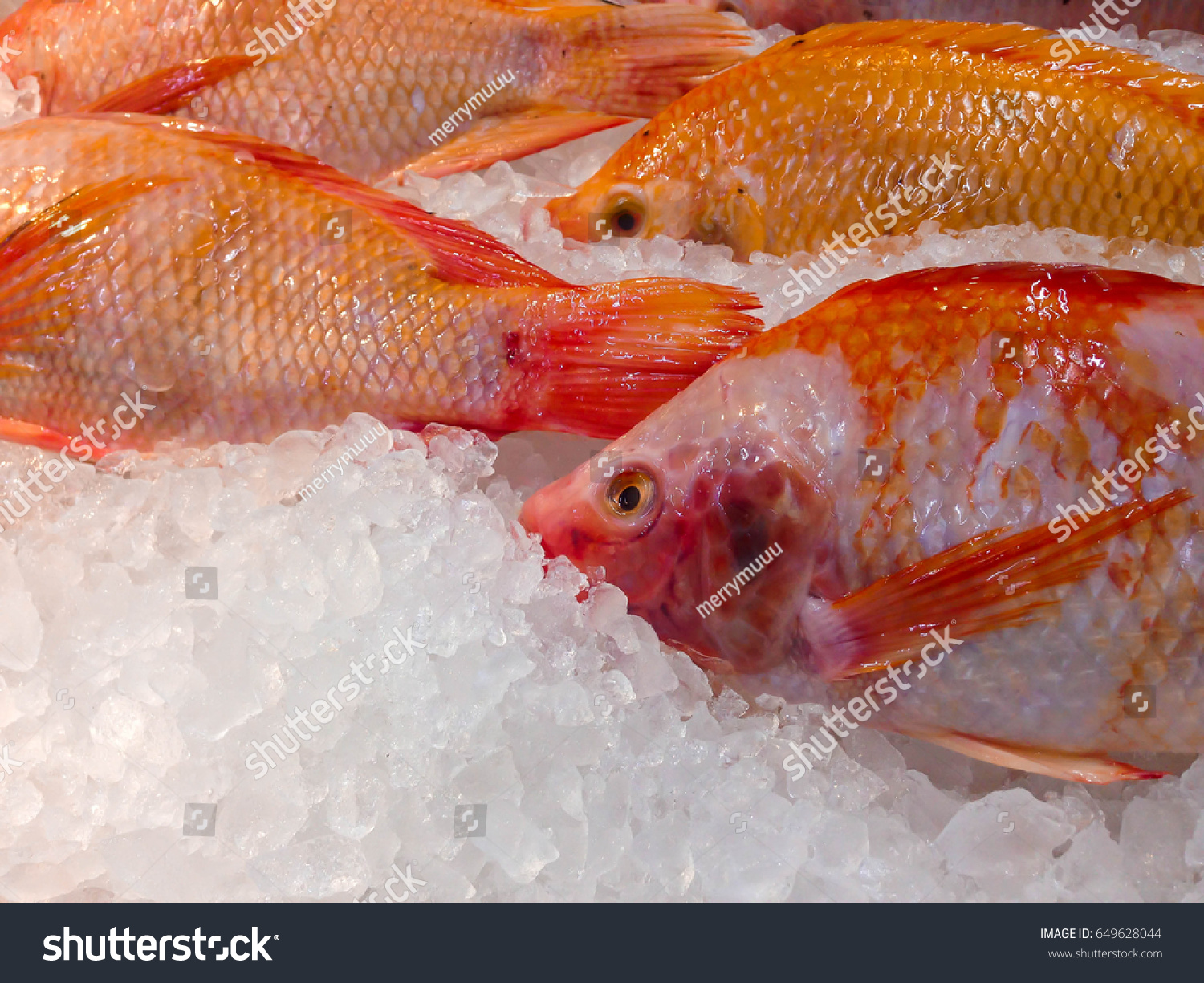 Fresh Fish On Ice Colorful Healthy Stock Photo (Royalty Free ...