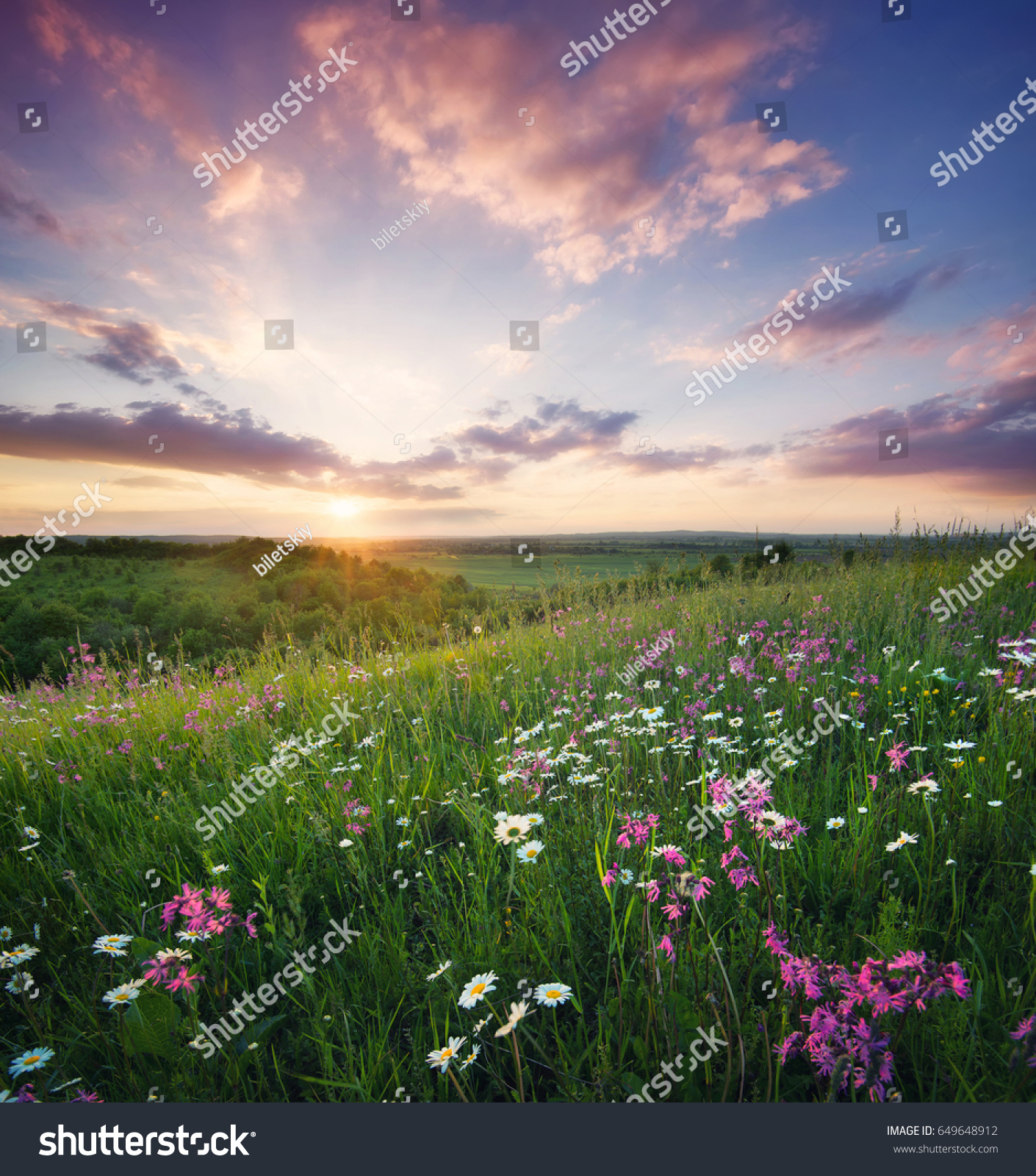 Flowers On The Mountain Field During Sunrise Beautiful Natural Landscape In Summer Time