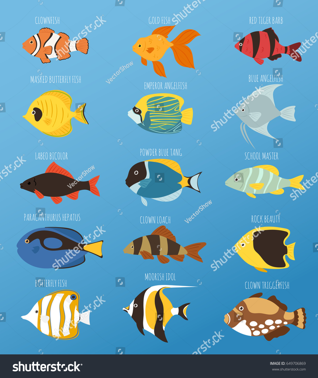 Exotic Tropical Fish Race Different Breed Stock Vector