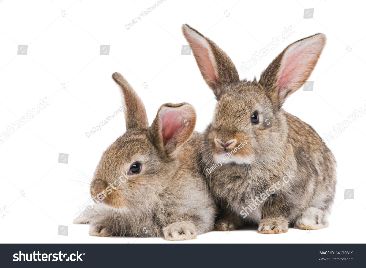 Two Young Light Brown Rabbits Long Stock Photo 64970809 ...