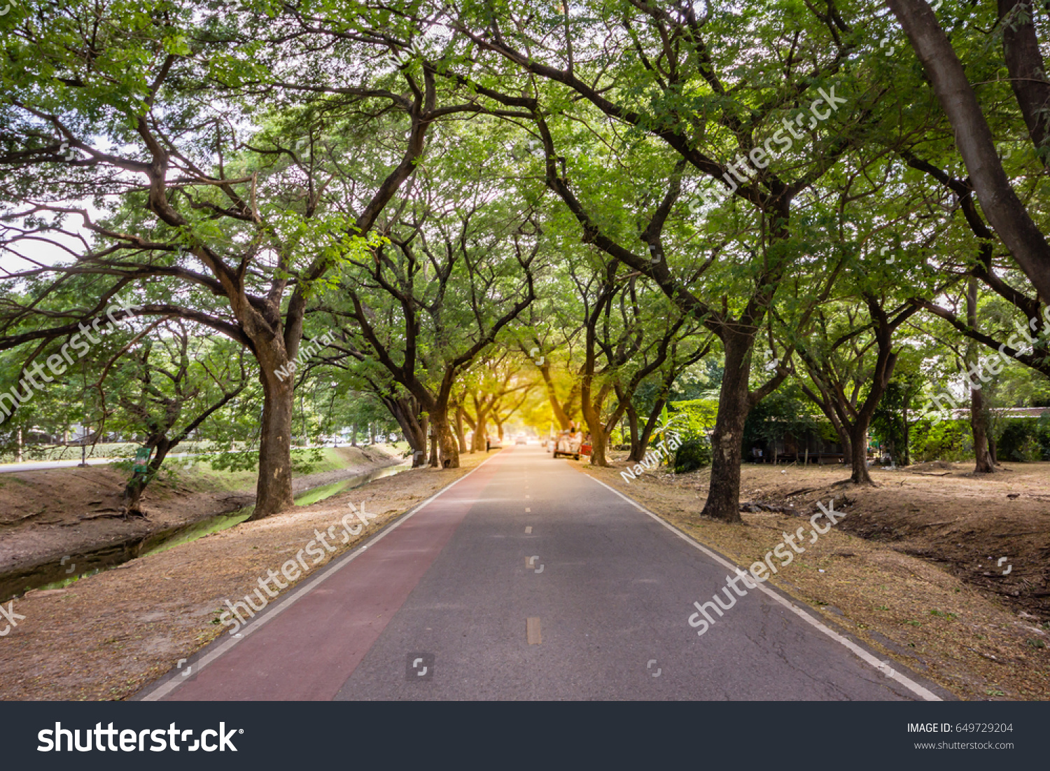 Landscape Straight Road Under Tunnel Trees Stock Photo 649729204 ... for Straight Road With Trees  155fiz