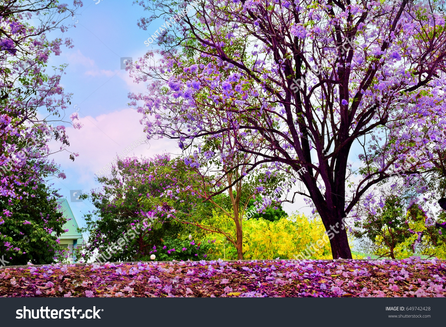 Beautiful Romantic Purple Flowers Trees Flower Stock Photo Safe To